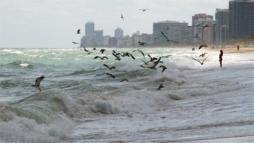 a Windy Day on Miami Beach