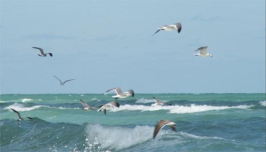 Hungry Birds 3