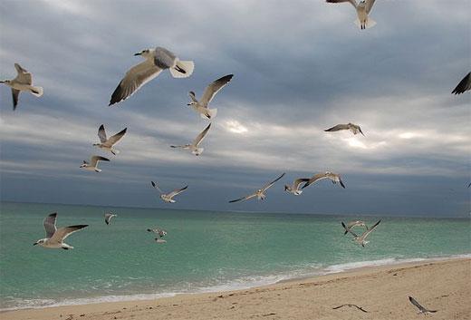 Birds in Miami Beach