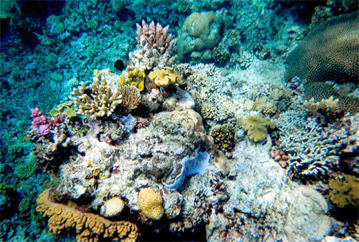Nemo hiding
