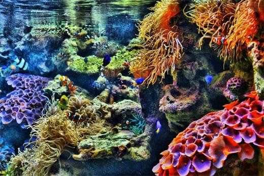 Mini Coral Reef