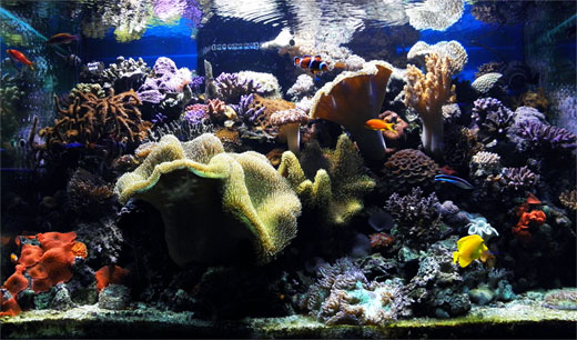The Reef Update