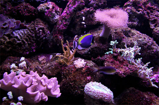 Great Barrier Reef bis