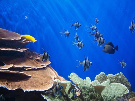 London zoo coral reefs
