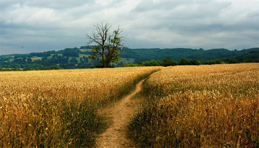 The Cotswold Way IV