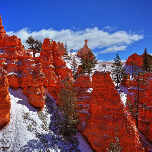 Below the Rim...Bryce Canyon