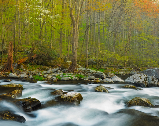 smoky mountain spring stream