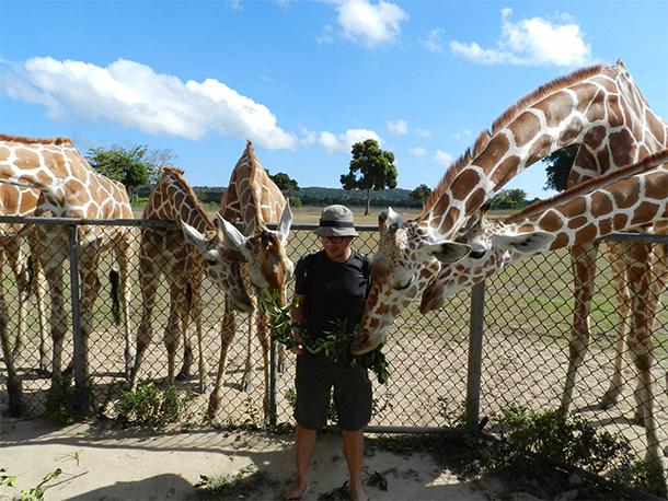 Calauit Safari Tour Feeding Giraffe