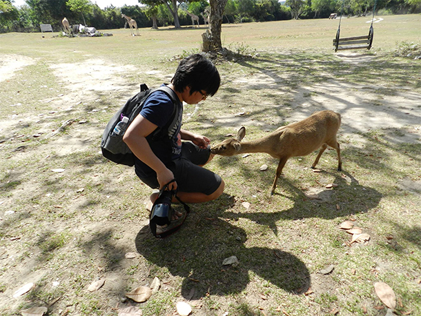 Calauit Safari Tour Calamian Deer