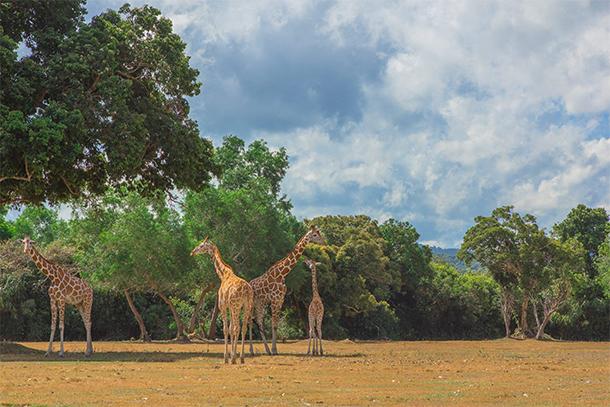 Calauit Safari Tour Feeding Station View
