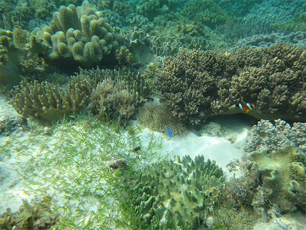 Things To Do In Moalboal, Cebu Finding Nemo