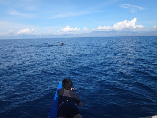 Things To Do In Moalboal, Cebu Dolphin Watching
