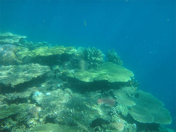 Coron Ultimate Tour Siete Pecados Marine Park Corals