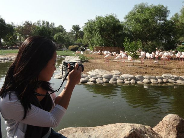 Bahrain Attractions Al Areen Flamingo Lake