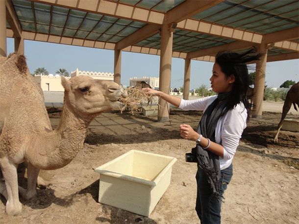 Bahrain Attractions Camel Feeding