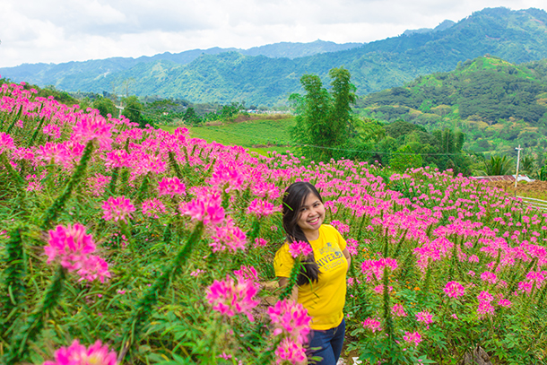 Balamban Cebu Road Trip Sirao Flower Farm