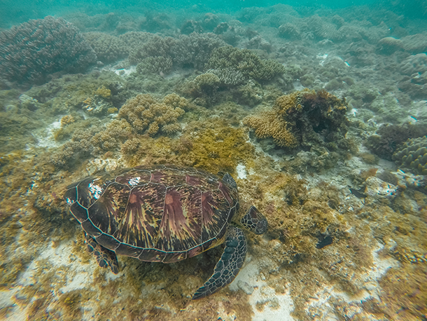 Negros Oriental Photos: First Sea Turtle Spotted