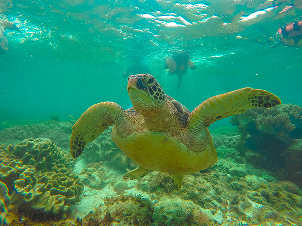 Negros Oriental Photos: Up Close with a Sea Turtle