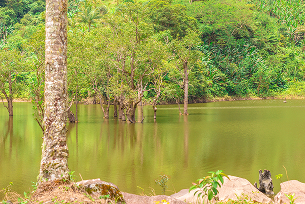 Negros Oriental Photos: Lake Cabalen-an