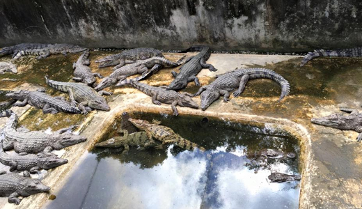 Palawan Wildlife Rescue and Conservation Center (Palawan Crocodile Farm)