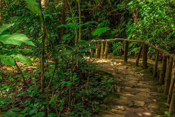 Twin Crater Lakes: Steps to Lake Balinsasayao