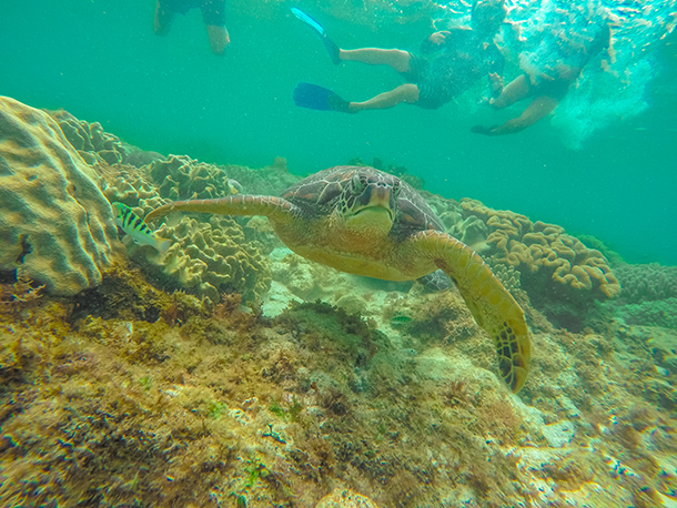 Apo Island: Sea Turtles with us on the background