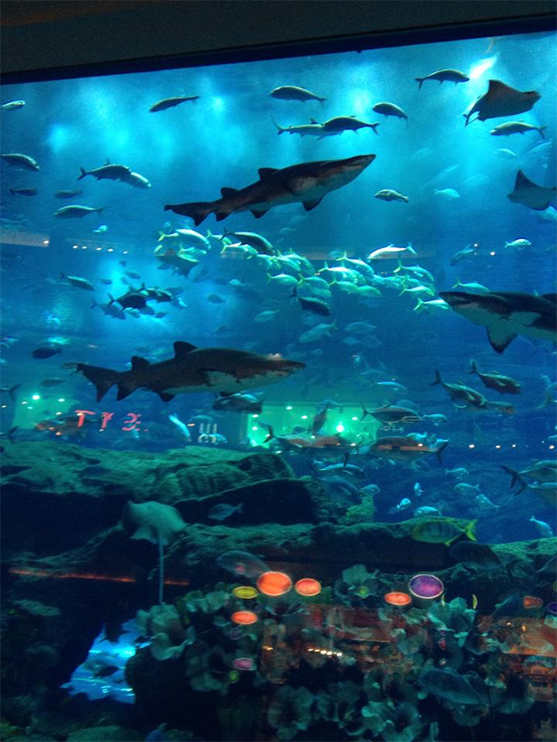 Things to Do Dubai: Dubai Aquarium & Underwater Zoo