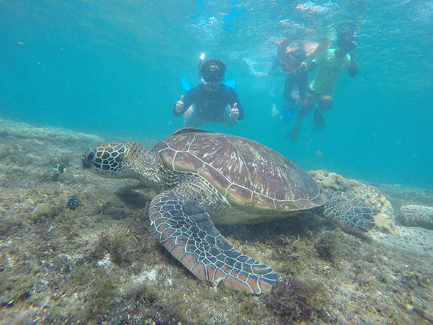 Dumaguete Itinerary: Swimming with the sea turtles