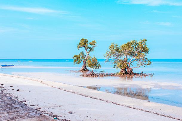Camogao Mangrove Tree