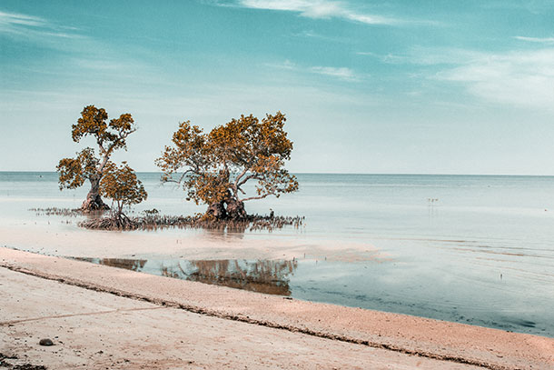 Oldest Mangrove in Siquijor