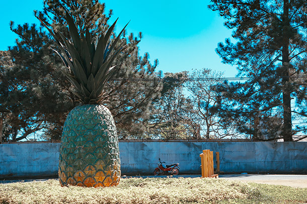 Big Pineapple at the Camp Phillips