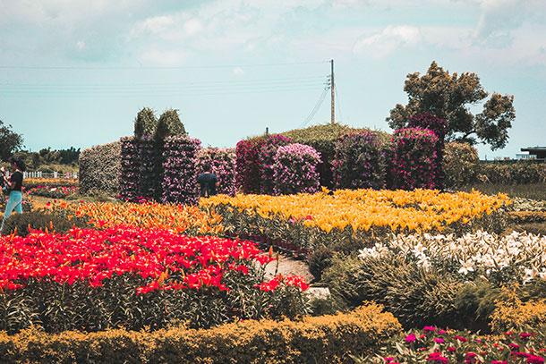 Fields of Flowers in Houli